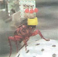 cucaracha-ciber