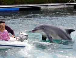 Delfín Gaspar