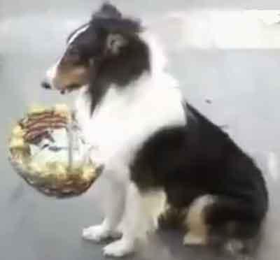 Mascota pidiendo dinero