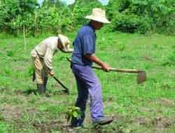 Trabajando en el campo