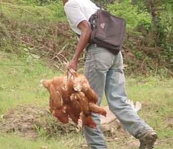 Un campesino con sus gallinas
