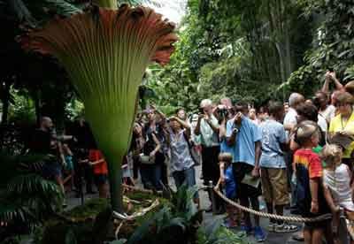 Los visitantes observan la Titan Arum en flor.