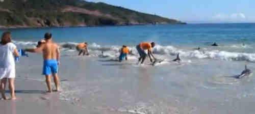 Delfines varados