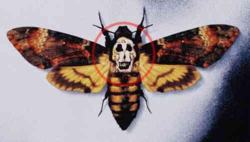 mariposa-silencio-corderos