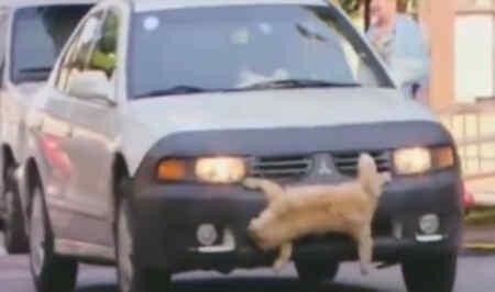 Gato atropellado
