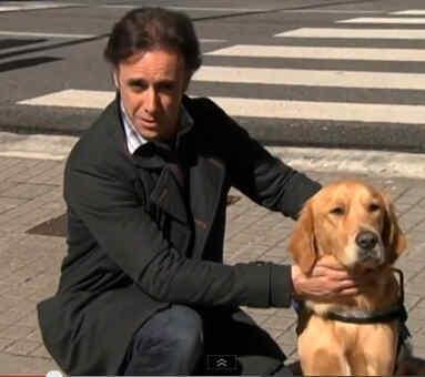 Perros lazarillo, para usuarios de smartphone
