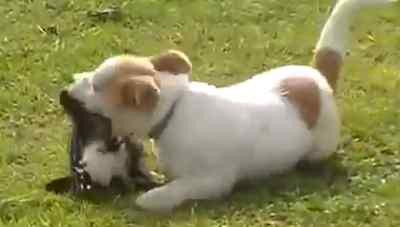 Perro y urraca