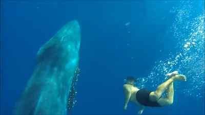 Dos jóvenes liberan a una ballena
