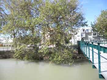 Árboles en el Canal Imperial de Aragón