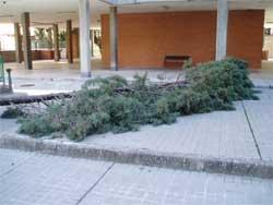 Árbol caido