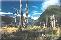 bosques destruidos