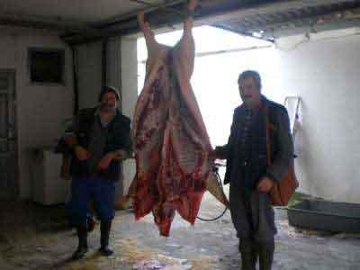 Matacía del cerdo