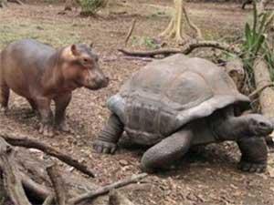 El hipopótamo huérfano