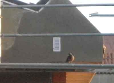 Nido de palomas tapado