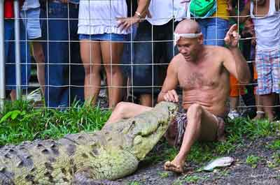 Muere el cocodrilo domesticado de Costa Rica