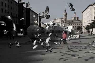 Palomas en la plaza del Pilar