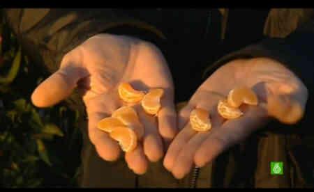 gajos-mandarinas