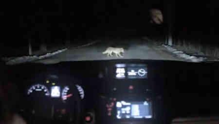 Un perro roba coches en las carreteras de Rusia