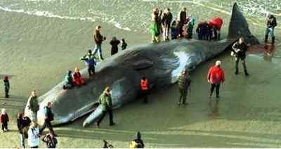 Ballena hallada muerta con 20 kg de plástico en su estómago