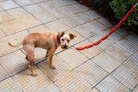 atar los perros con longaniza